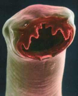 Parasiten Suchen Ein Zuhause